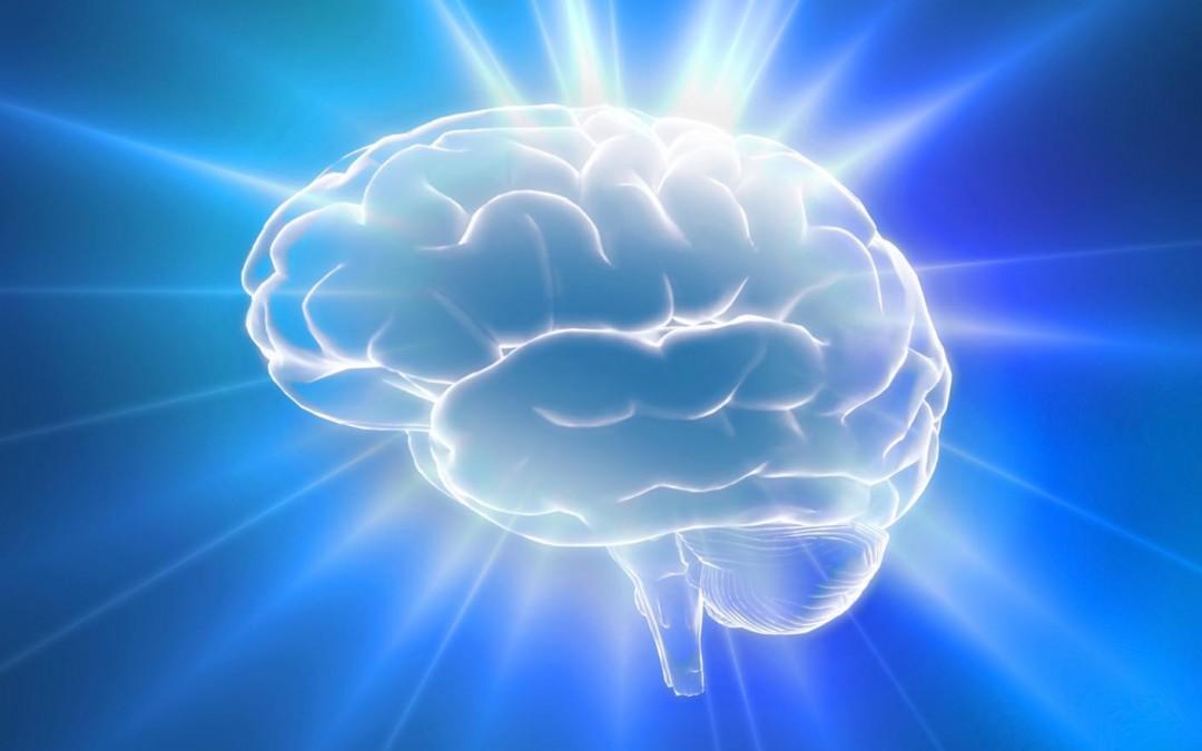 Por dentro do cérebro