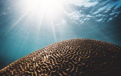 3 lições sobre neurociência comportamental: melhore sua performance