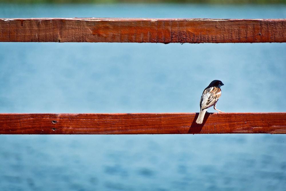 Benefícios do silêncio para a saúde mental, o foco e a produtividade